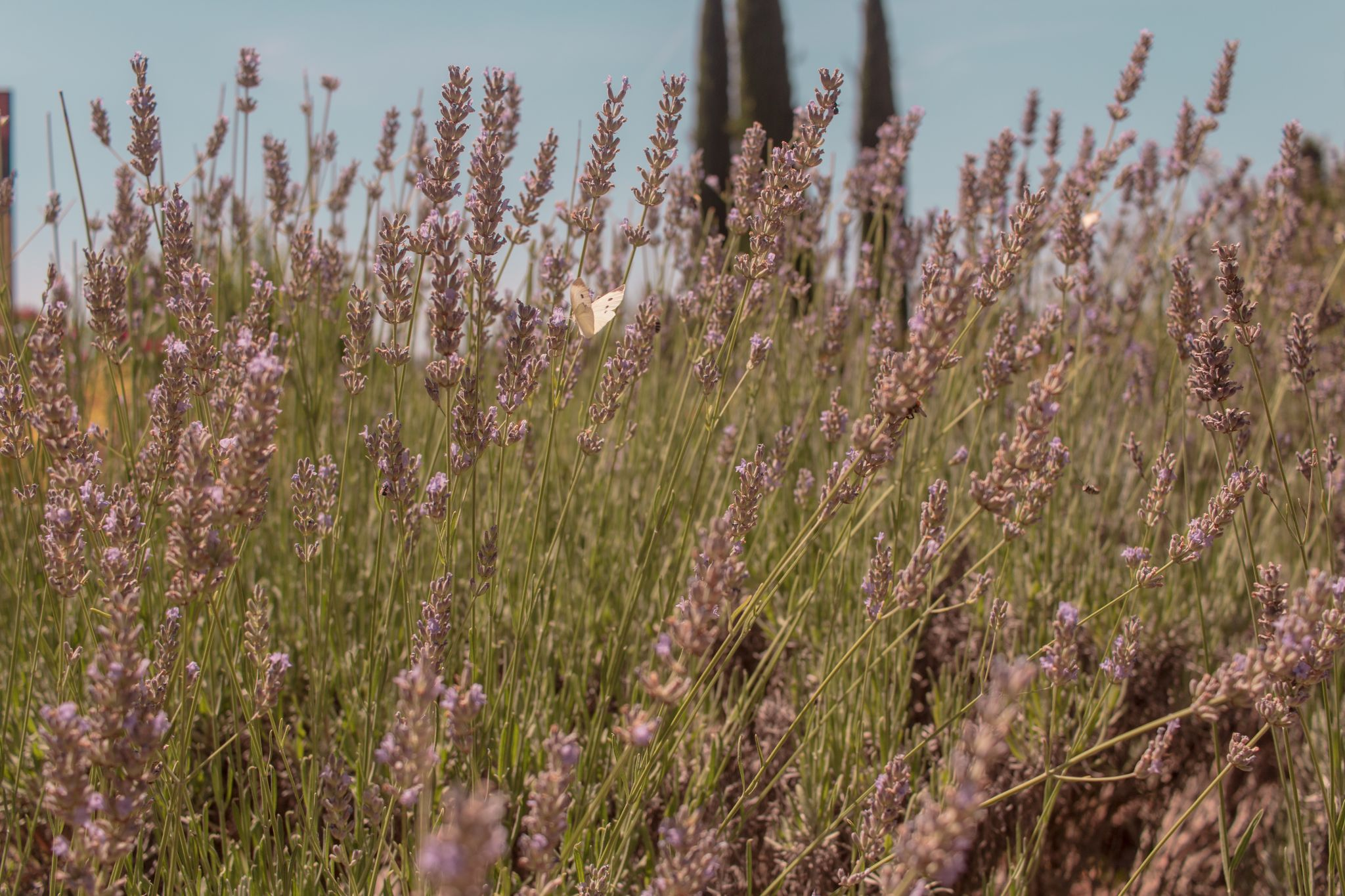 Adler Thermae Hotel Tuscany Hospitality Brand Hotel Travel Photography tuscan lavender fields